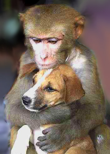 "This sad little female monkey lovingly, tenderly embraces a puppy at a shop in the Bangladesh capital, Dhaka. The pet monkey, bought from an animal trader, ""adopted"" the puppy recently, spending many hours hugging it. Hunting and selling of monkeys are prohibited under Bangladesh laws but such laws are seldom enforced.�Her face, filled with sadness and loneliness, illustrates how deeply monkeys feel.�Their depth of emotion, capacity for sorrow, and ability to love are similar to those of humans."